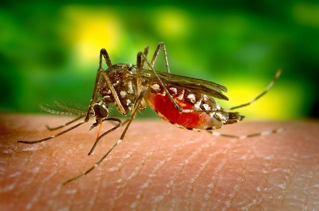 Historia del Zika